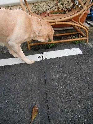 犬が歩けば~ 011