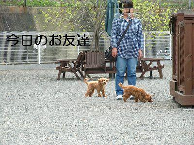 dog run 005