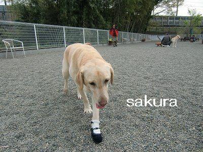 dog run 001