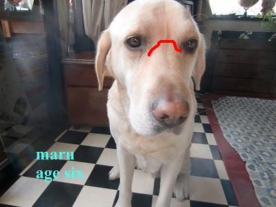 maru_20120107005059.jpg