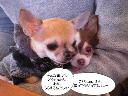 new_CIMG5369.jpg