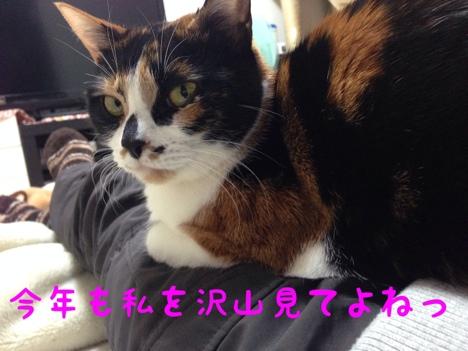 fc2blog_2014010114000928d.jpg