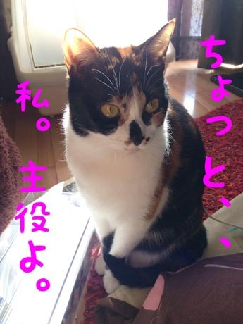 fc2blog_20140106114747cc6.jpg