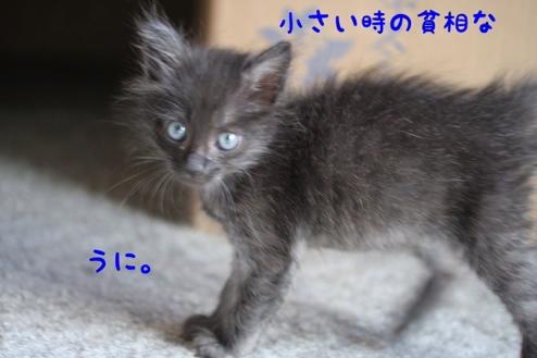 fc2blog_20140120185656f73.jpg