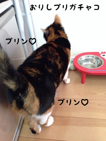 fc2blog_20140120190853e60.jpg