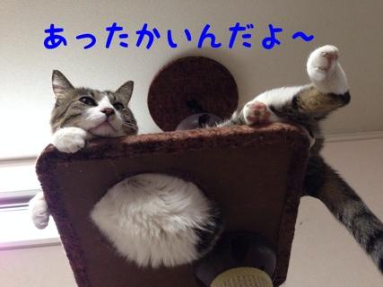 fc2blog_201401241533310bd.jpg