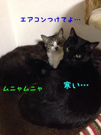fc2blog_201401311242089f0.jpg