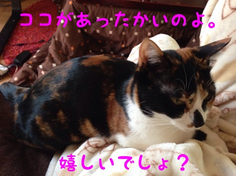 fc2blog_20140131125100d8c.jpg
