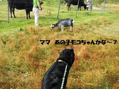 sikokukarusuto6.jpg