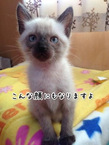 fc2blog_20141024160630260.jpg