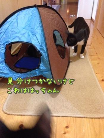 fc2blog_20141031160122e59.jpg