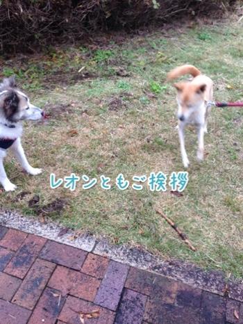 fc2blog_20141130200220bc8.jpg
