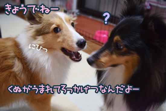 DSC_0359_2014100518393748e.jpg