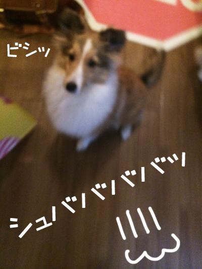 S__5660686.jpg