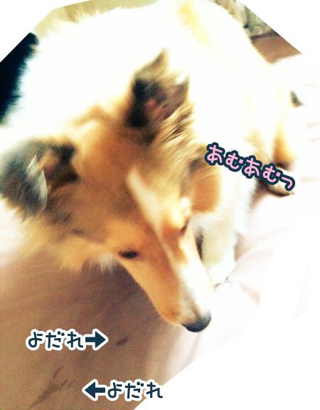 S__6307862.jpg