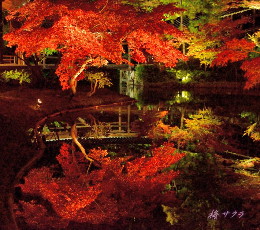 京都12(12)変更済