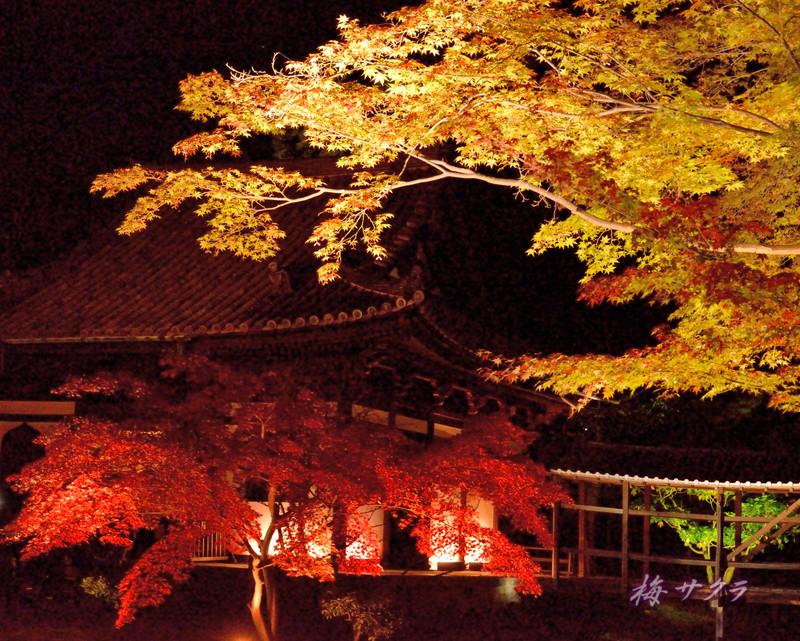 京都12(13)変更済