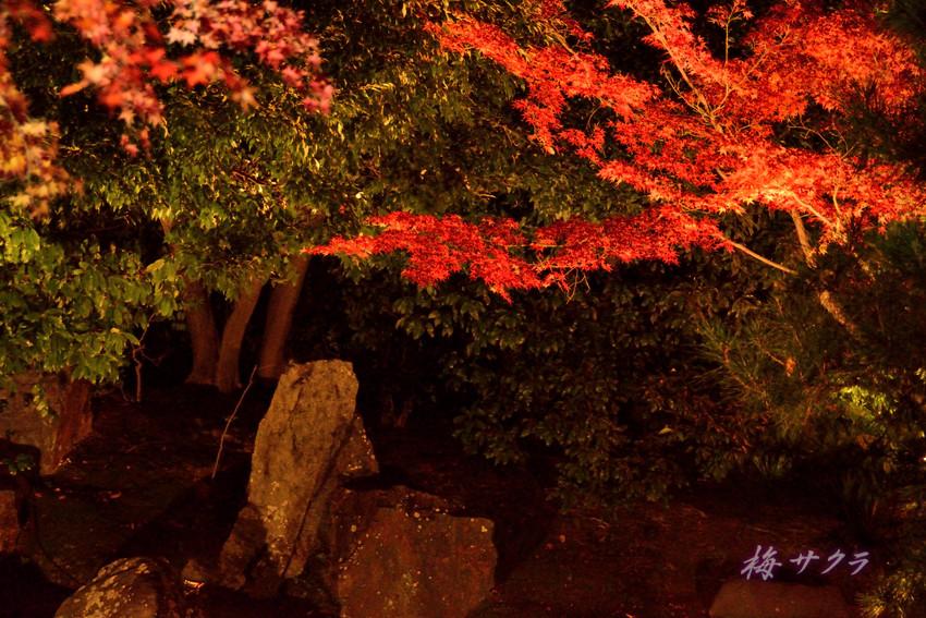 京都13(8)変更済