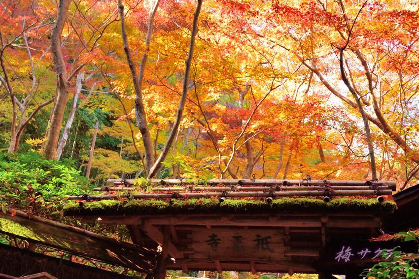 京都14(1)変更済