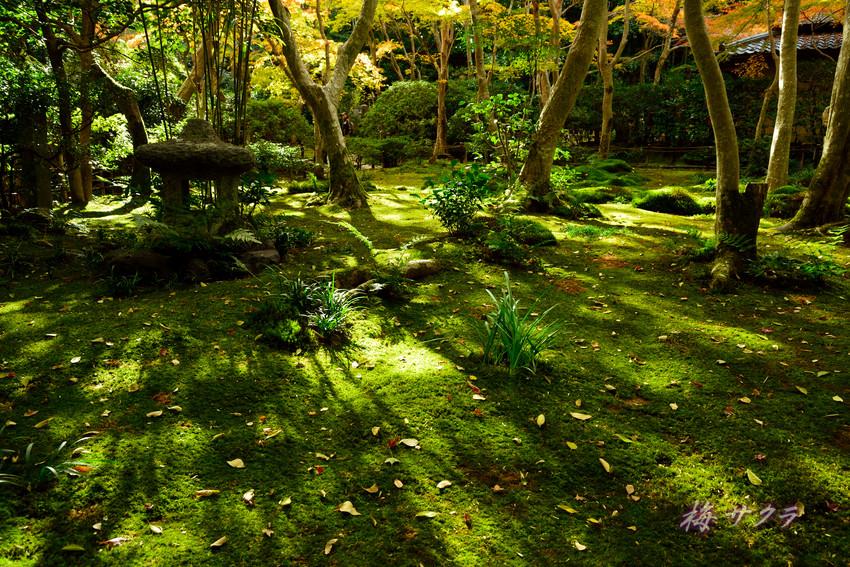 京都14(3)変更済