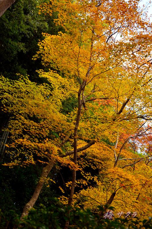 京都14(4)変更済