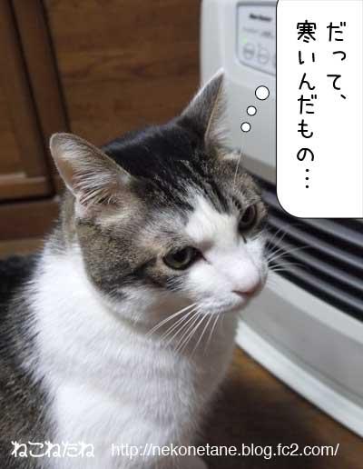 だって寒いんだもの…