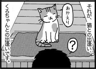 それが、猫との出逢い、くろちゃんとの出逢いです。