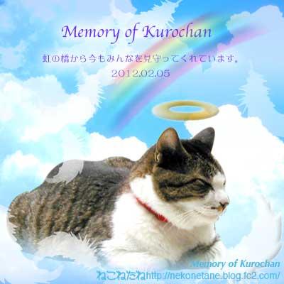 Memory of Kurochan 虹の橋から今もみんなを見守ってくれています。2012.02.05