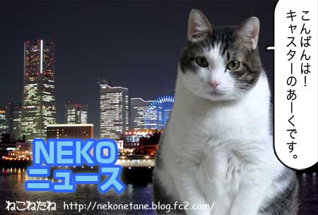 NEKO ニュース こんばんは、キャスターあーくです。