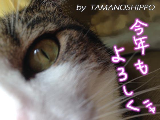 近づいてくる猫 0019