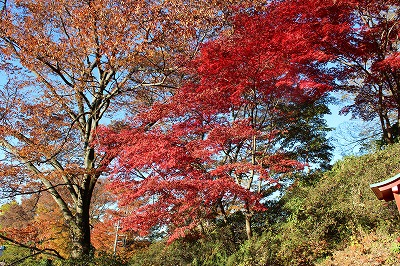 2013-11-23 織姫山の紅葉とネコ 008