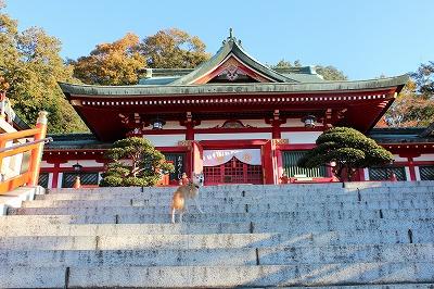 2013-11-23 織姫山の紅葉とネコ 016