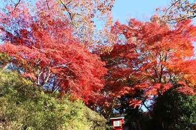 2013-11-23 織姫山の紅葉とネコ 004