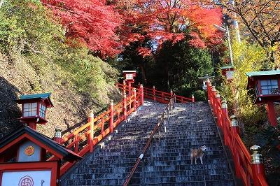 2013-11-23 織姫山の紅葉とネコ 001