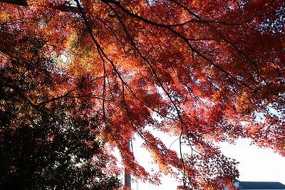 2013-11-23 織姫山の紅葉とネコ 019