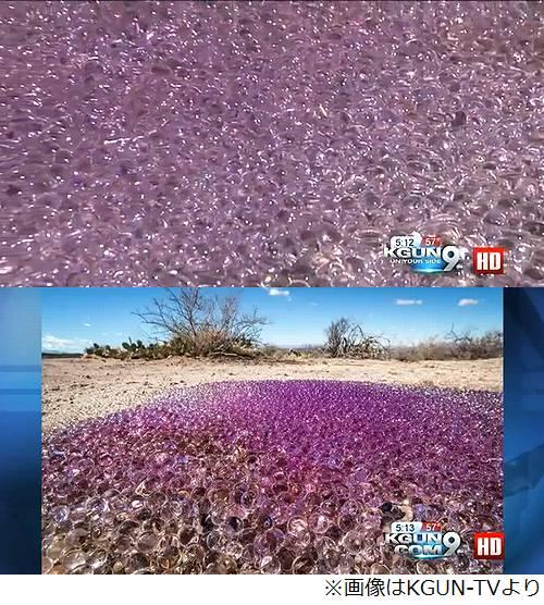砂漠に現れた謎のブニョブニョ 紫に光る大量の物体に専門家も「?」
