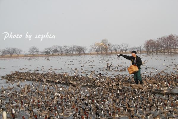 20130210瓢湖6