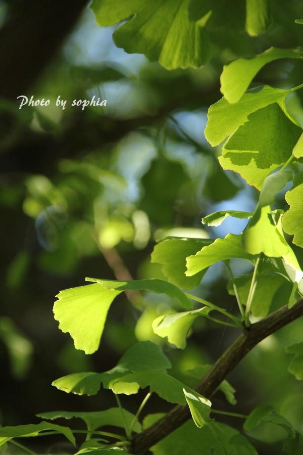 お杖木の葉