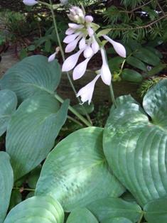 my-garden 100