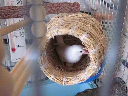 つぼすと擬卵