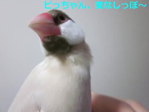 ぴっちゃん、へん~