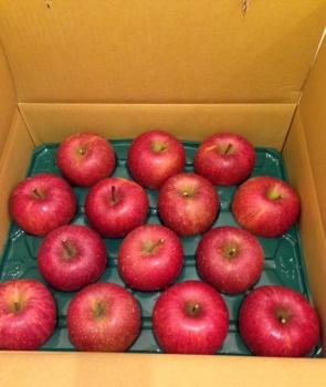 長野のりんご1