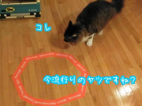 猫ホイホイに3