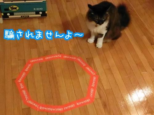 猫ホイホイに4
