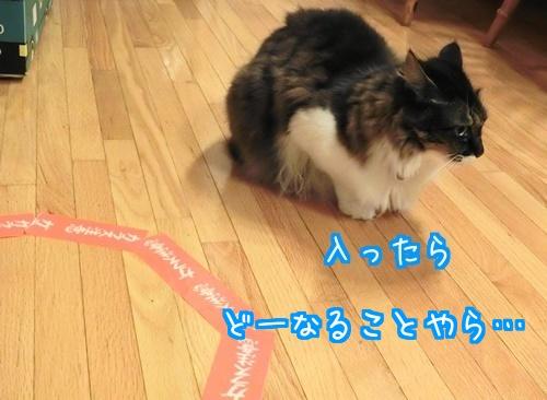 猫ホイホイに6
