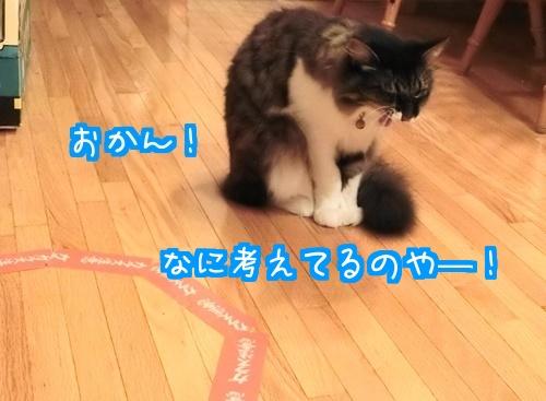 猫ホイホイに8