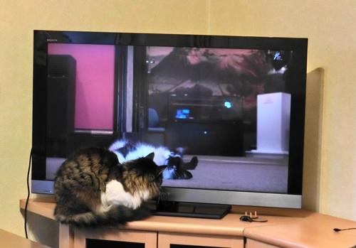 テレビのごはん2