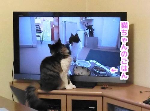 テレビのごはんに