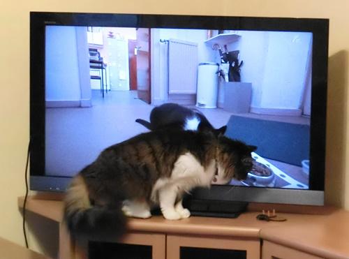 テレビのごはん3