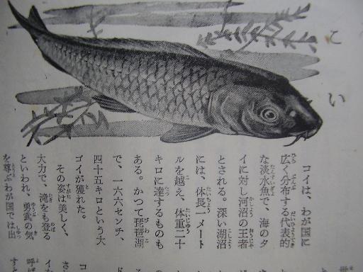 動物11-10